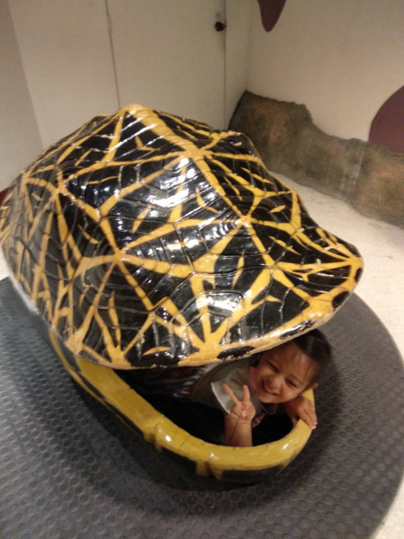 Asa as a turtle-มาลองเป็นเต่ากันเถอะ